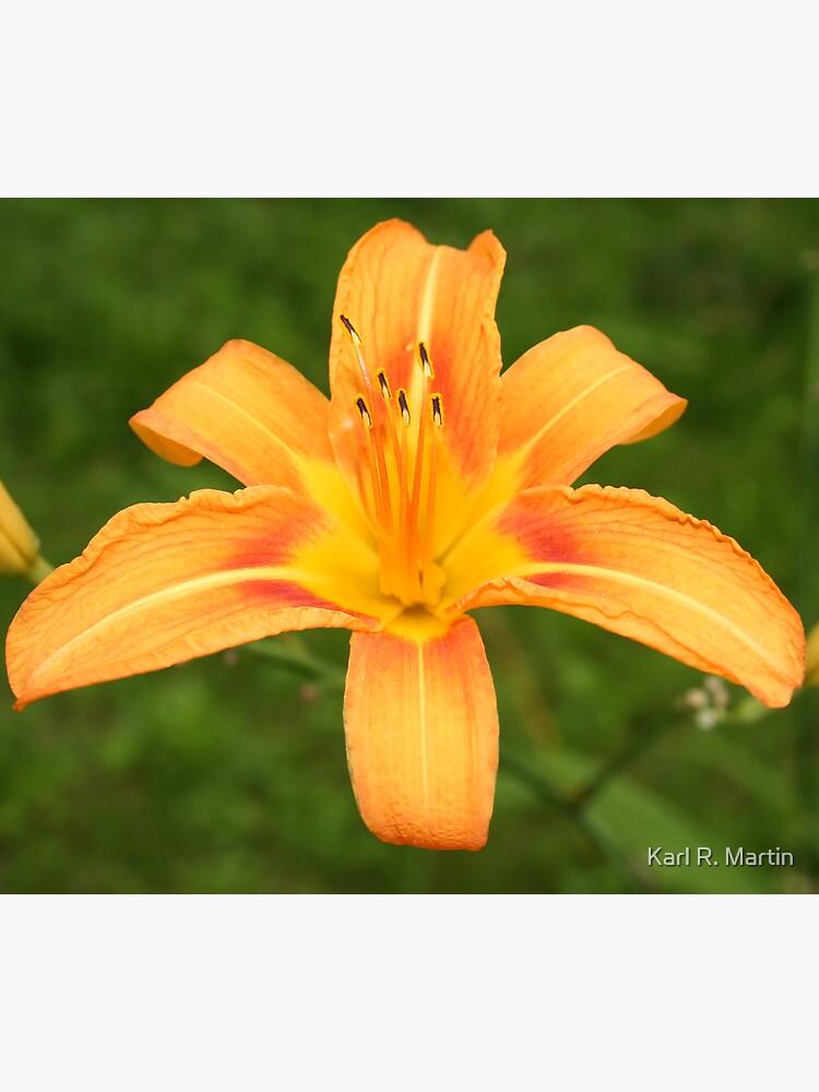 Orange Daffodil by SirEagle