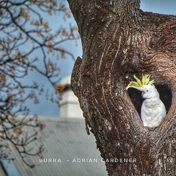 Burra by garts