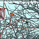 Perch.... birds in a black tree by Cherie Hanson