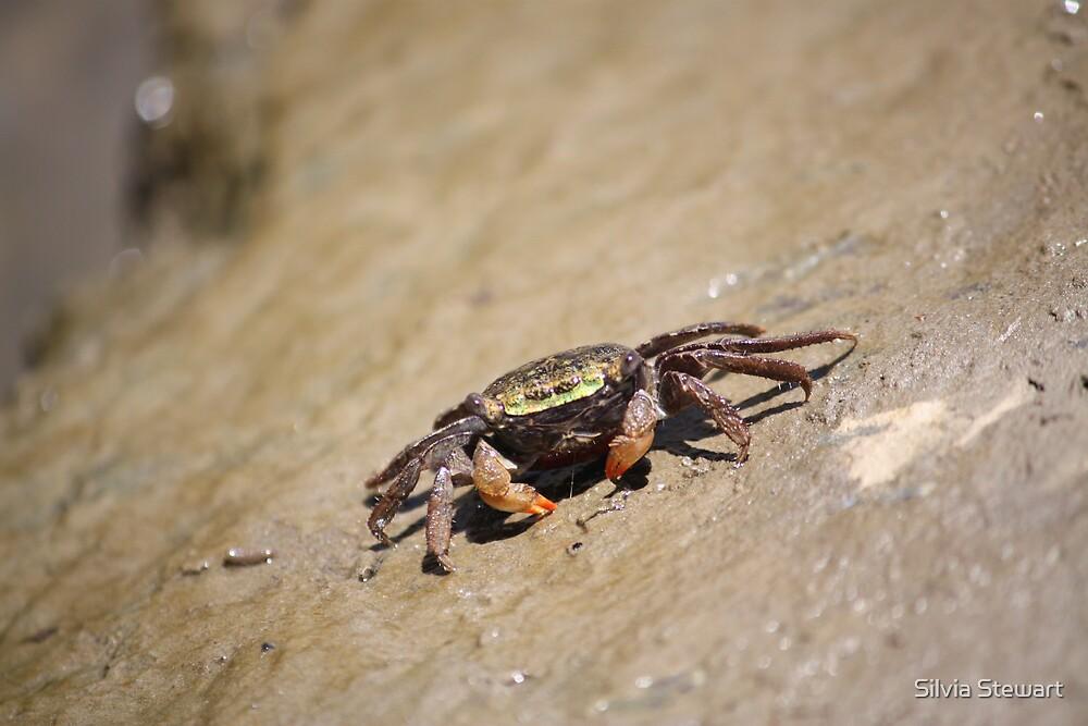Crab by Silvia Solberg