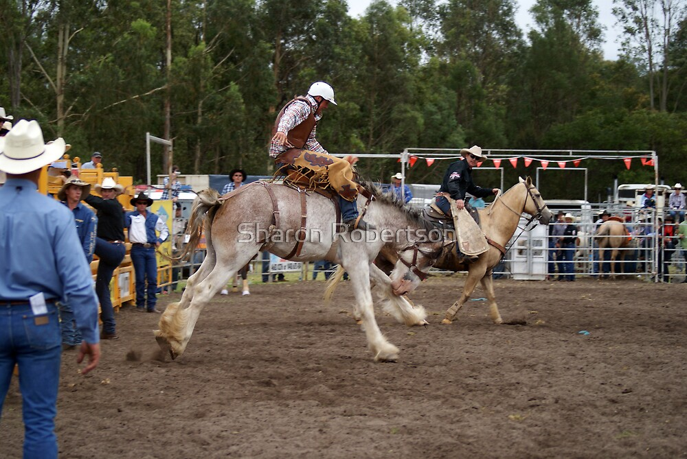 Picton Rodeo BRONC9 by Sharon Robertson