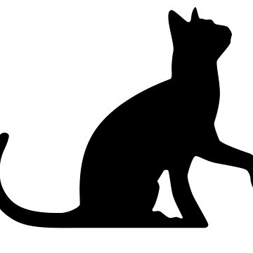 Cat by Acolytecs