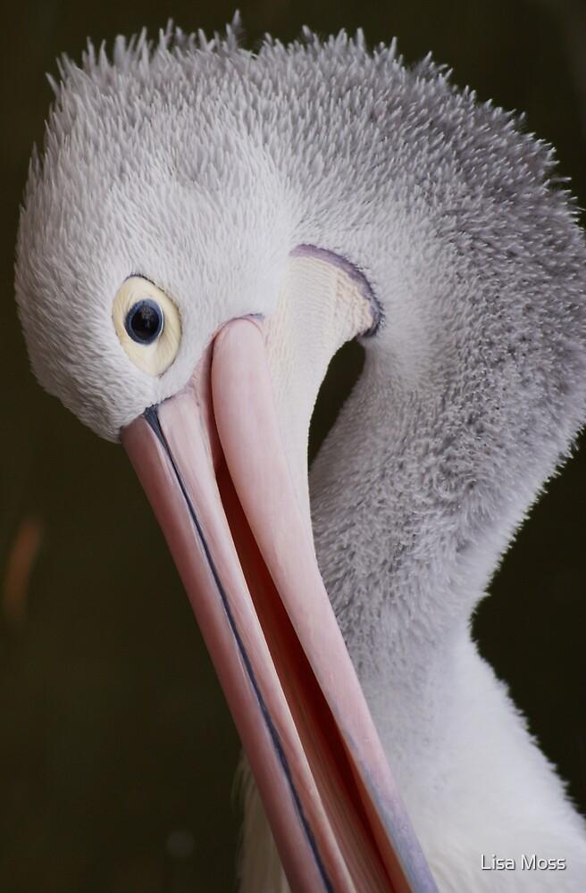 Pelican by Lisa Moss
