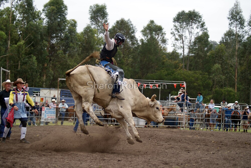 Picton Rodeo BULL2 by Sharon Robertson