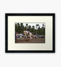 Picton Rodeo BULL2 Framed Print