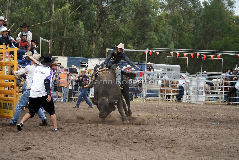 Picton Rodeo BULL5 by Sharon Robertson