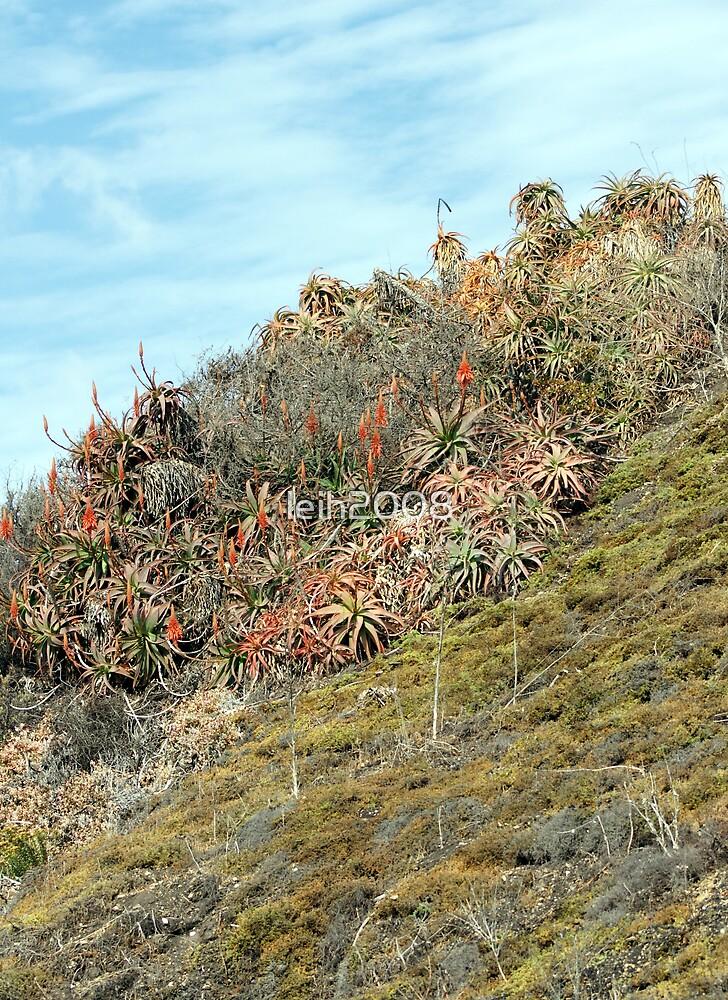 California's amazing landscape along coastal area just outside Santa Barbara, CA USA by leih2008