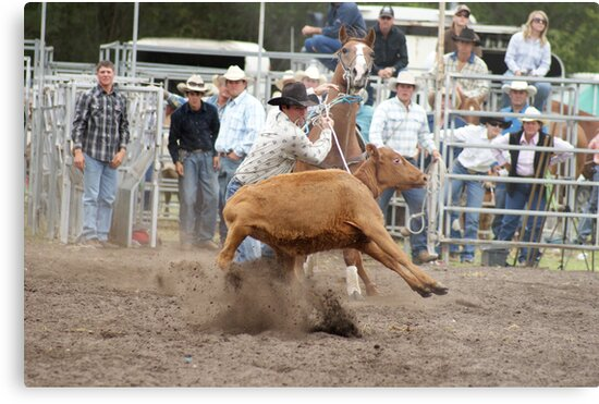 Picton Rodeo ROPE3 by Sharon Robertson