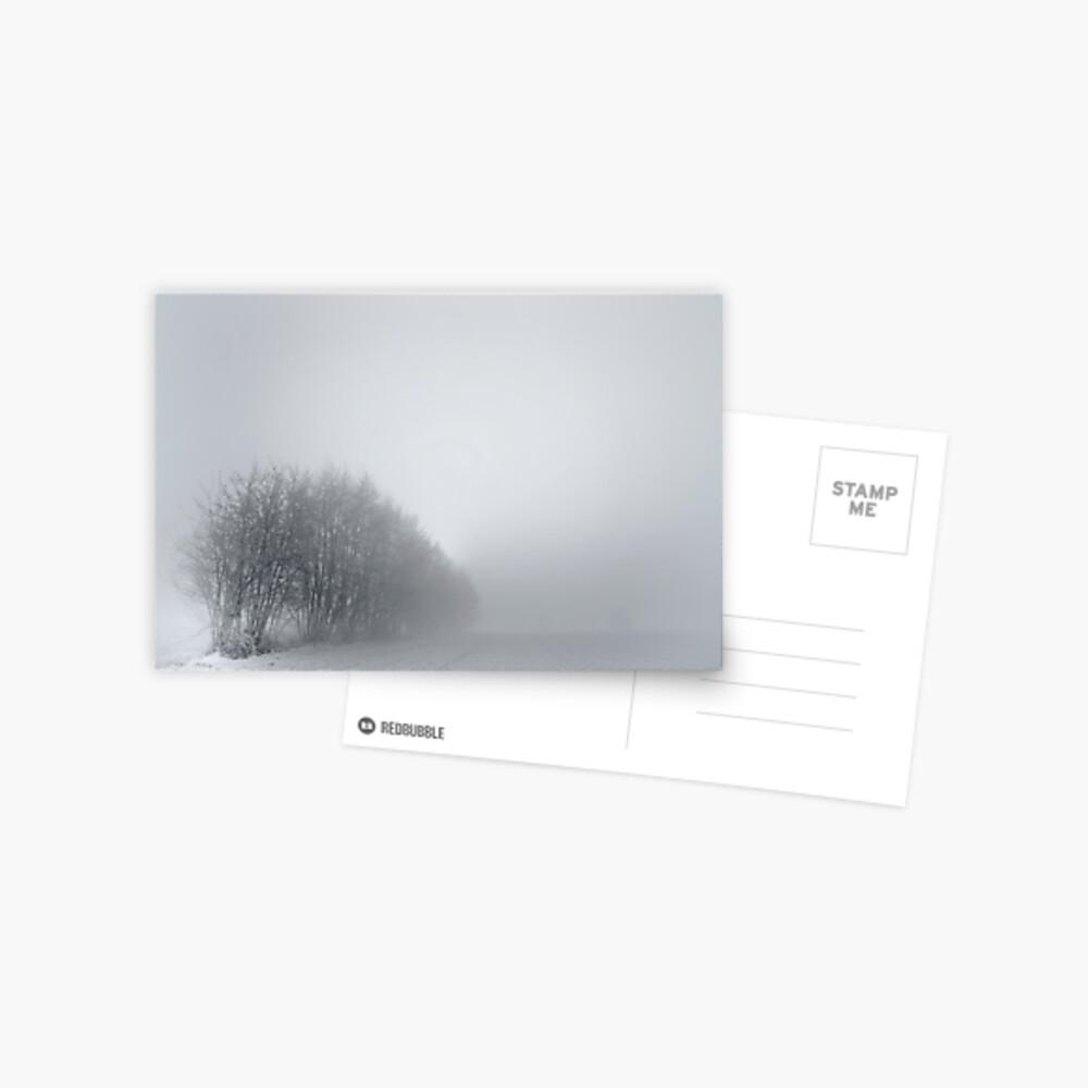 Trees; Mist Postcard
