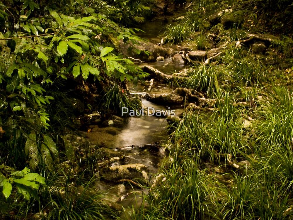 Mossman Gorge Stream by Paul Davis