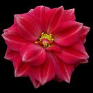 Red Flower Number One by Yvonne Carsley