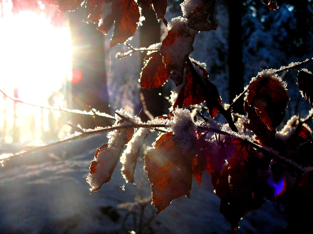 Leaves by Elizabed