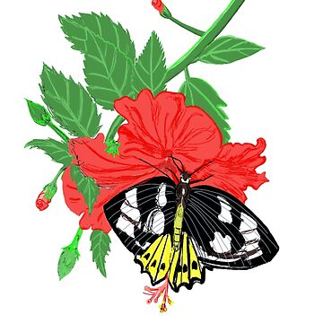Red Hibiscus Flower and Birdwing Butterfly by leororing