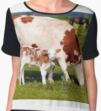 Cow with little calf on pasture Chiffon Top