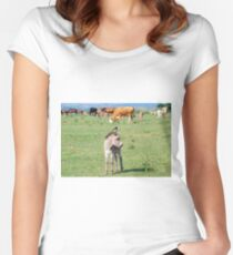 Grey little donkey on pasture Women's Fitted Scoop T-Shirt