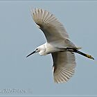 Little Egret Spreads its Wings by DonMc
