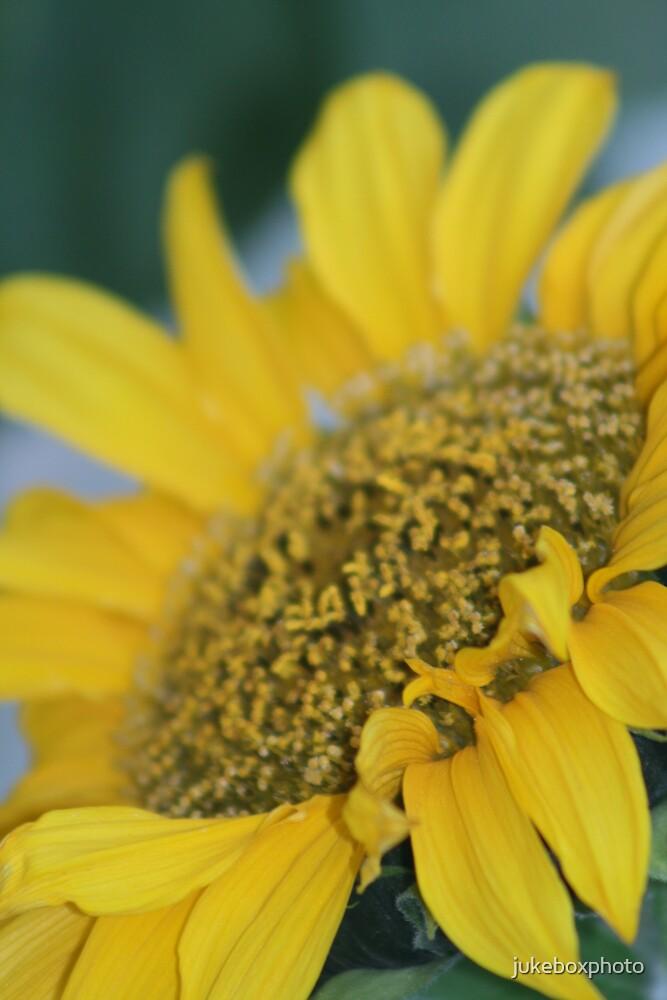 Sunflower by jukeboxphoto