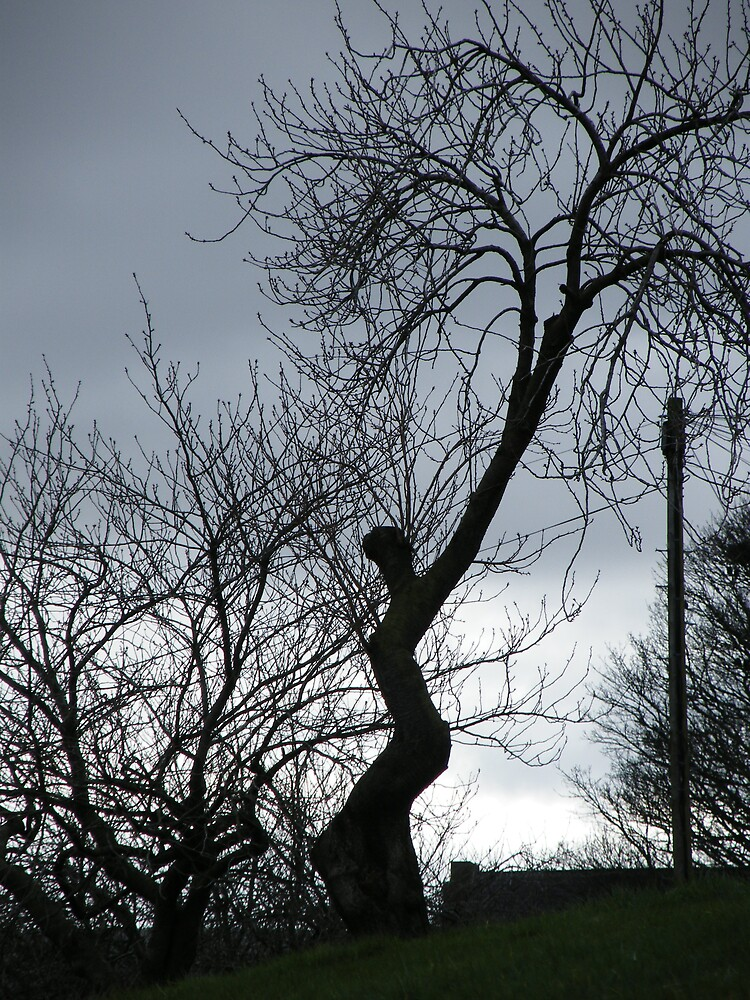 Lady tree by Sharon Edmunds