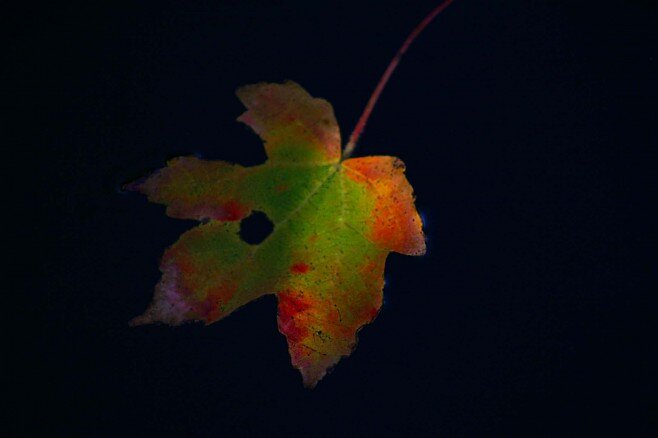 Leaf on Water's Surface by Dennis Blauer