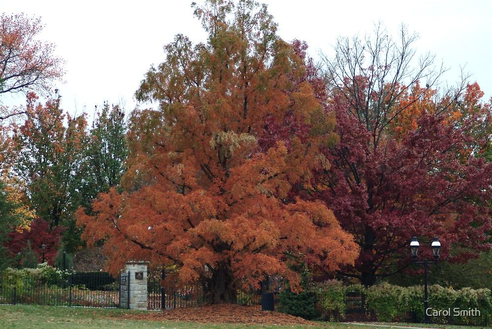 Fall in the garden by Carol Smith