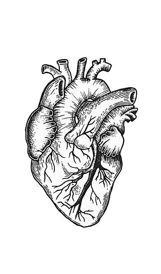 Láminas Fotográficas Corazón Anatómico Blanco Y Negro De