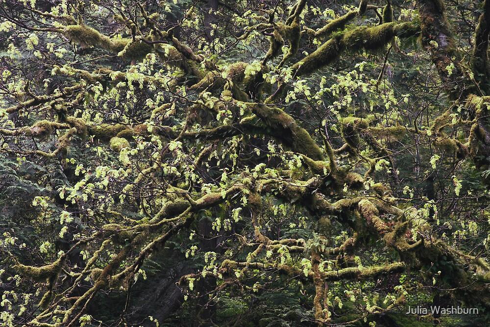 Funky Tree by Julia Washburn
