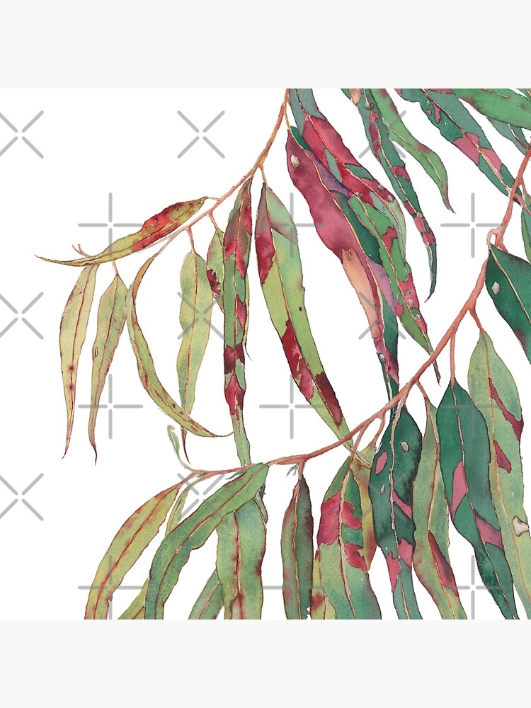 A touch of red - watercolour of eucalyptus branch by zoyamakarova