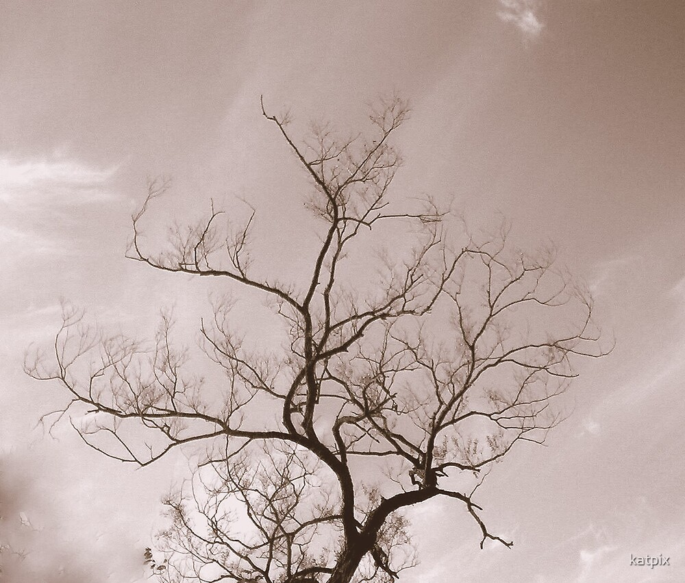 Tree in Black and White by katpix