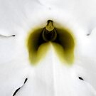 Close up orchid by Bumblebeegirl