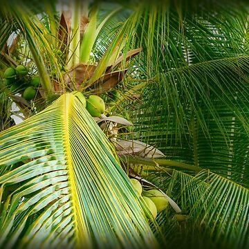 ©GS Coconut Paradise I by OmarHernandez