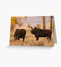 A bull moose, during the rut,  courts a cow along the Gros Ventre River, Jackson Hole, Wyoming Greeting Card