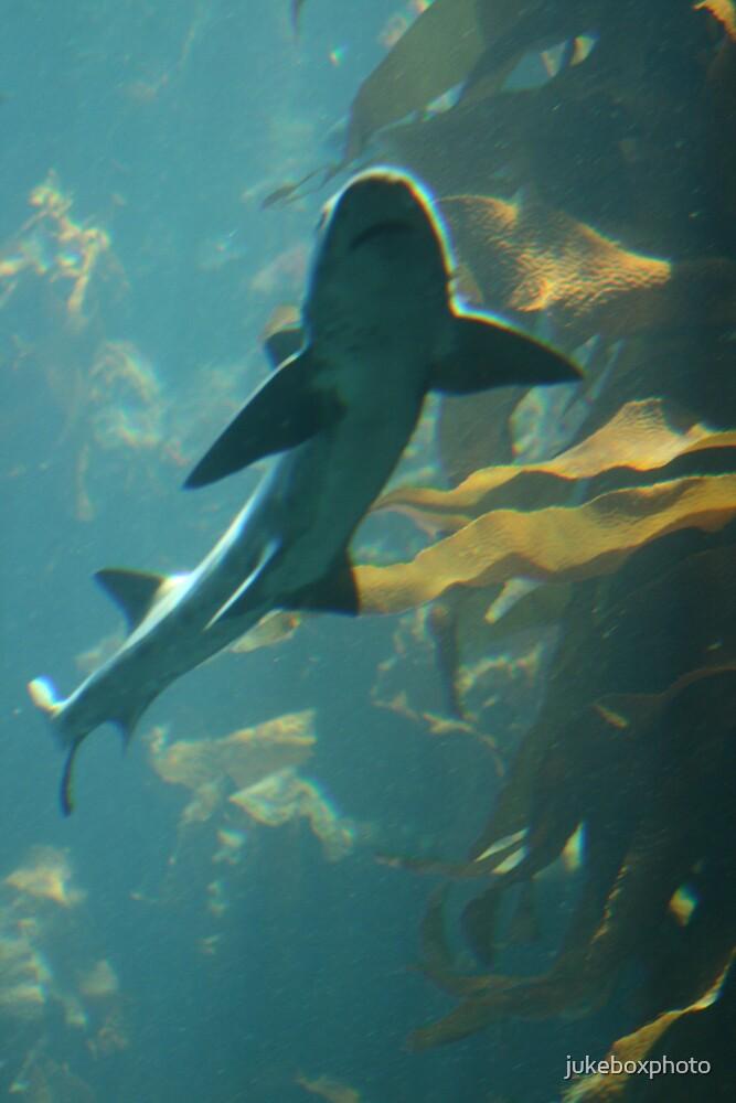 Underwater adventures by jukeboxphoto