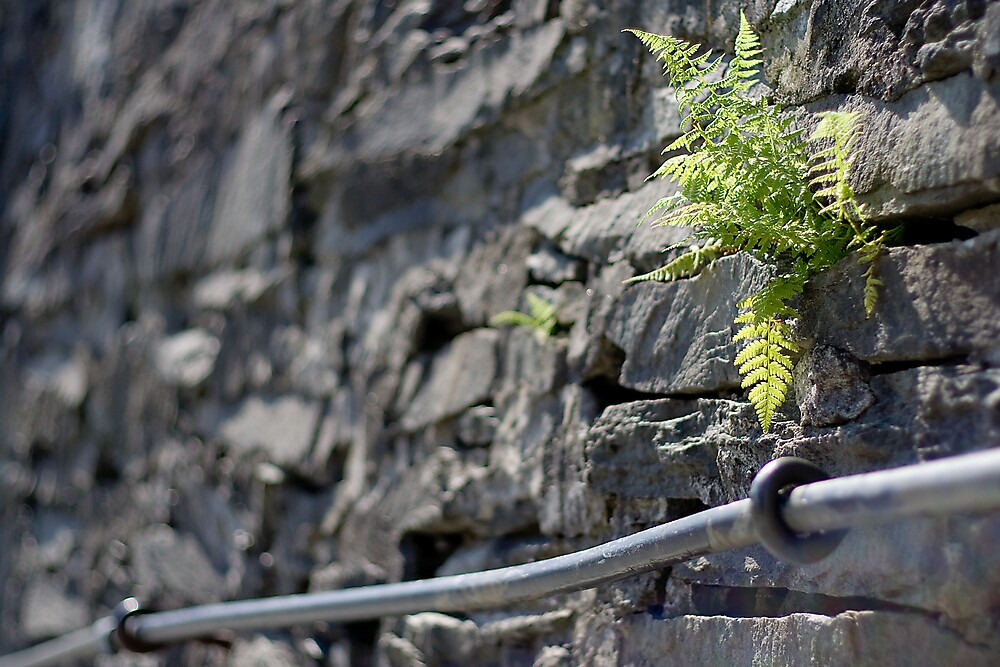 Wall fern by Lars Clausen