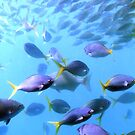 Fish of the Great Barrier Reef by Michael John