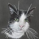 Molly the black and white cat by cathyscreations