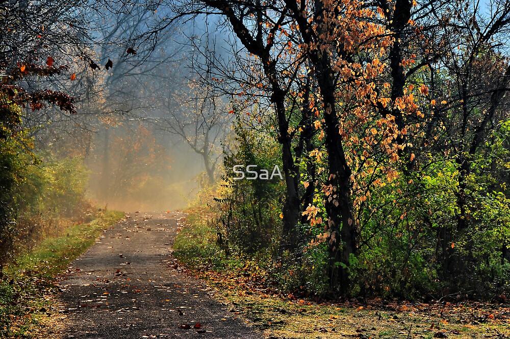 Foggy Bike & Hike Trail by SSaA