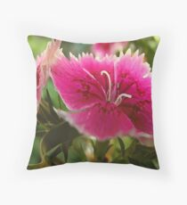 Hot Pinks, Dianthus Flowers. Throw Pillow