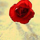 One Simple Rose by Joél Carela
