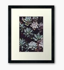 Succulent Plants Framed Print
