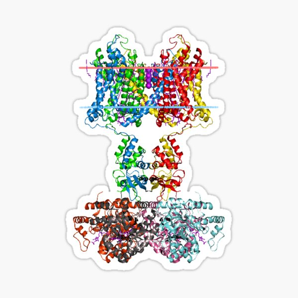 Molecular Structure of Ion Channels Sticker