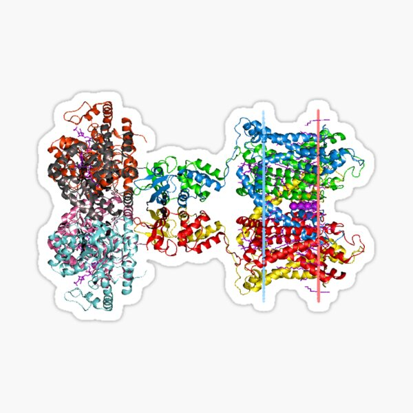 Molecular Structure of Ion Channels, #Molecular, #Structure, #Ion, #Channels, #MolecularStructure, #IonChannels, #IonChannelMolecularStructure, #IonChannel Sticker
