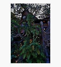 Tarzan's Tree House Photographic Print