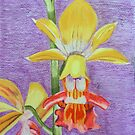 Yellow Orchid by Wendy Sinclair