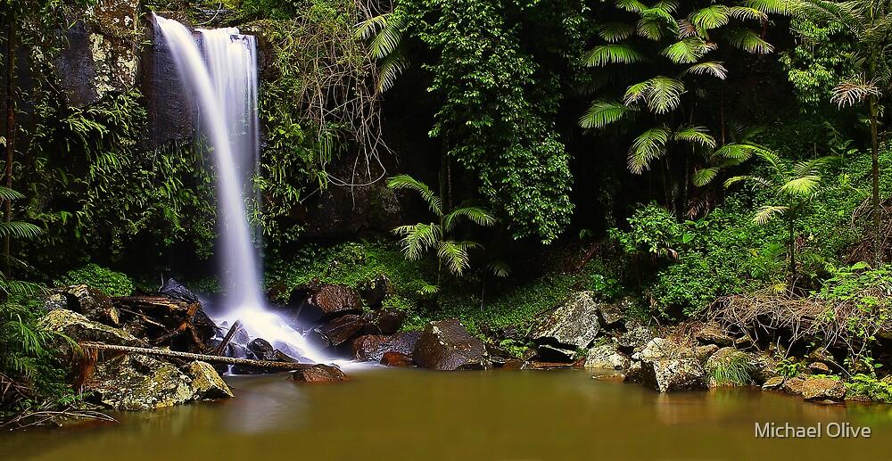 Curtis Falls - Mt Tamborine by Michael Olive