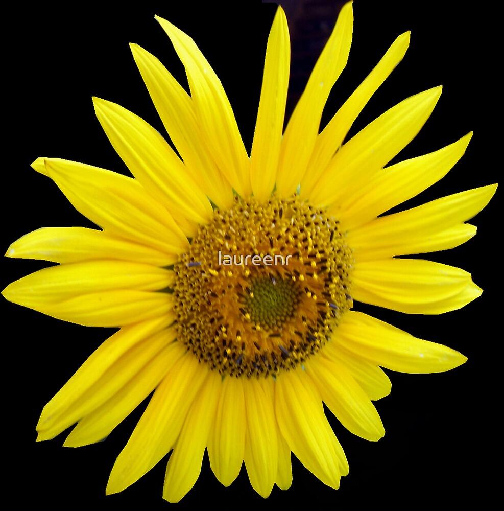 Sunflower by laureenr