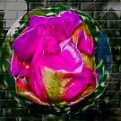 Cactus Bloom Fractalius by thegrizz15