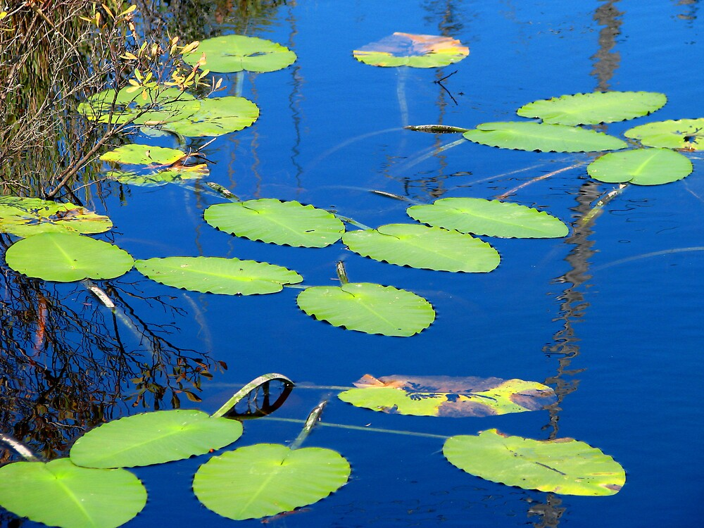 Lily Pads on Secluded Pond by Patty Gross