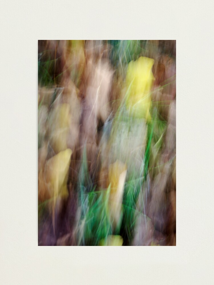 Alternate view of Autumn in the forest Photographic Print