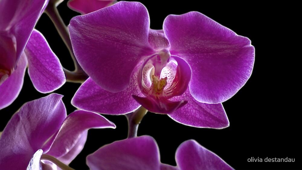 Orchid by olivia destandau
