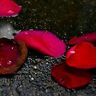 Rose Petals by Kristen Swanson